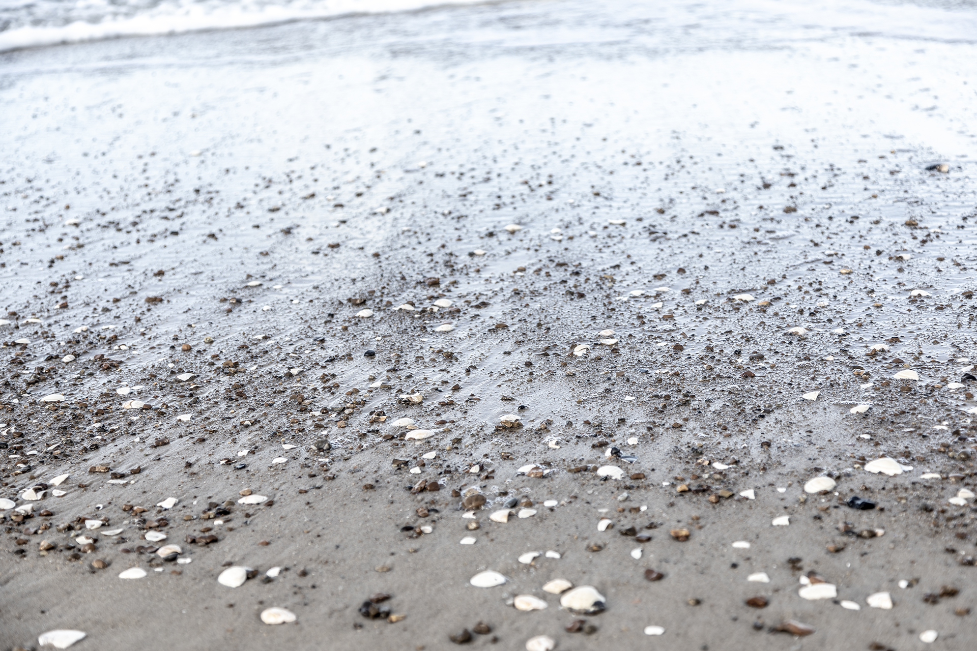wild beachcombers, marine mollusk shells and more | denmark