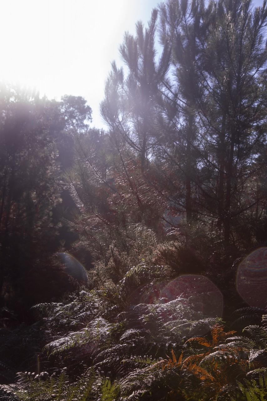 forêt des landes | aquitaine | france